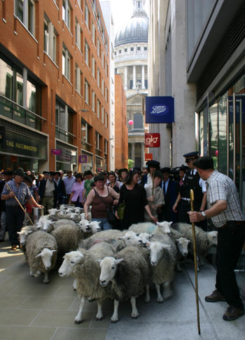 sheep-stpauls.jpg